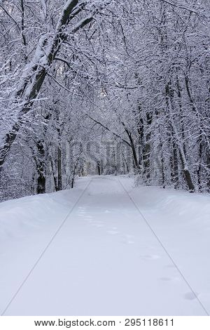 Path Through The Woods In Winter At Staring Lake Park