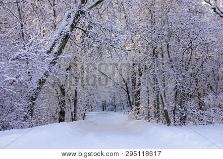 Beautiful Winter Scene With Hoarfrost After Snowfall
