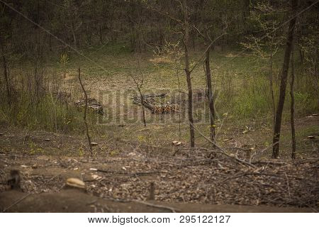 Cut Trees And Stump In Forest. Environment And Deforestation Concept. Wooden Trunks. Ecology Concept