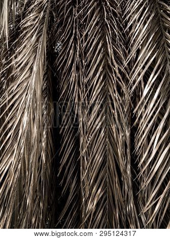 Brown Strips Of Dry Palm Leaf Parts. Abstract Background