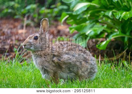 Cute Bunny Rabbit Sitting In The Green Grass In Summer