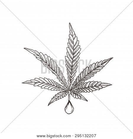 Cannabis Majiruana Oil Cbd, Hemp Oil Cannabis Leaf, Engraved, Style Woodcut, Vector Vintage