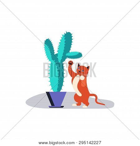 Cute And Playful Kitten Damage Houseplant. Guilty Cat Colorful Concept Isolated On White Background.