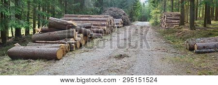 Bark Beetle-infected Trees, Timber Ready For Transport, South Bohemia, Czech Republic