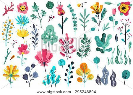 Summer Flowers Flat. Floral Garden Flower Flowering Plant Nature Florals Beauty Spring Anniversary A