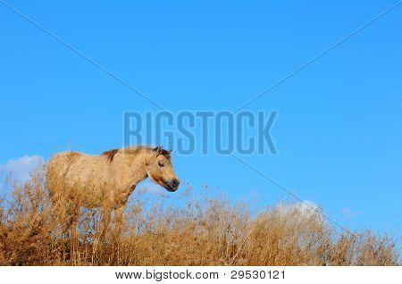 Little pony enjoying freedom on ranch in Canada
