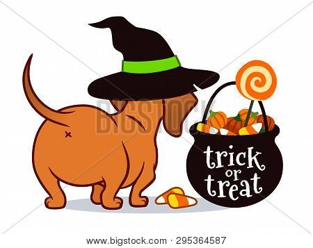 Halloween Dachshund Puppy Dog, In Witch's Hat With Black Trick Or Treat Cauldron Filled With Candy C