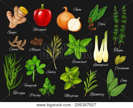 Spices And Herbs Vector Icons Of Vegetable Food Seasonings And Condiments. Red Pepper, Green Basil A