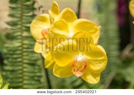 Close Up Of Yellow Orchid With Fern Background