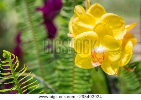 Yellow Orchid Flower With Fern Leaf Background