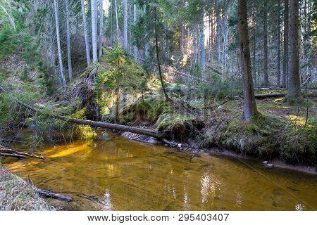 Citi Ieriki, Latvia. Nature And River Kumada. Trees And Water. Travel Photo 2019.14.04.