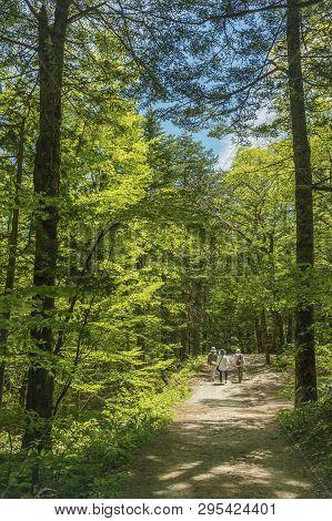 Walking Trail In Forest In Kamikochi National Park, Kamikochi, Japan.