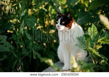 Homeless Attentive Cat Standing Among Green Leaves