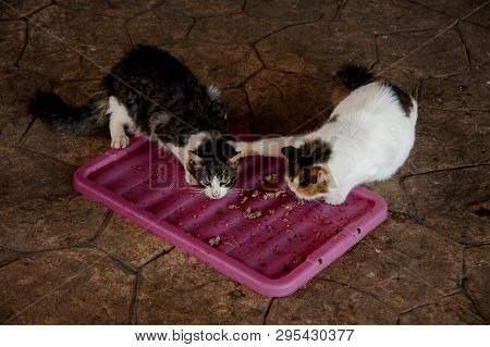 Two Homeless Cats Fighting For Food In Shelter