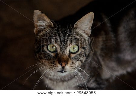 Close-up Of Insightful Cat In Animal Shelter