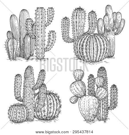 Hand Sketched Cactus Vector Illustration. Desert Flowers Compositions Isolated On White Background.