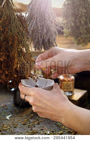Herbal Medicines. The Herbalist Collects Dried St. Johns Wort To Prepare A Herbal Medicine.