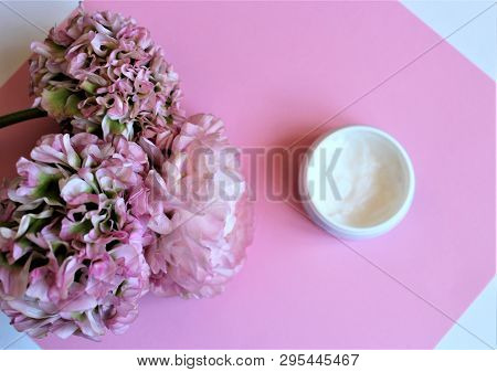 Light Pink Flowers (ranunculus) Isolated On Pink Background And Jar With White Face Cream
