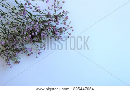 Lilac Flowers Of Gypsophila On A White Background.