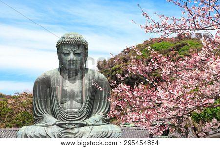 The Great Buddha and flowers of sakura, Kotoku-in temple, Japan