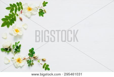 Flower background with rose hip flowers on white background. Flat lay, top view, flower spring composition