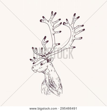Outline Portrait Of Male Red Deer, Hart Or Stag. Head Of Graceful Wild Animal With Antlers Hand Draw