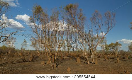 Small Termite Moulds Along Stuart Highway In Northern Territory, Typical Landscape Of Top End, Austr