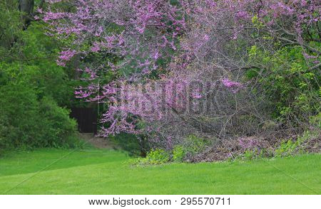 Trees with colorful spring bloom