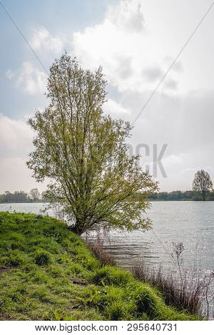 Budding Willow Shrub At The Bank Of A Dutch Lake In The Spring Season.