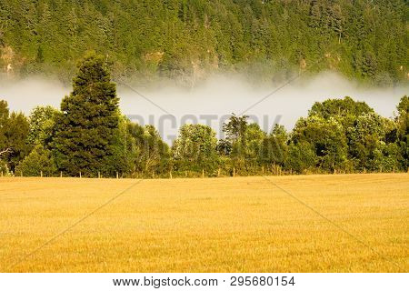 Early Fog In The Meadow, Villarrica, Araucania Region, Chile, South America