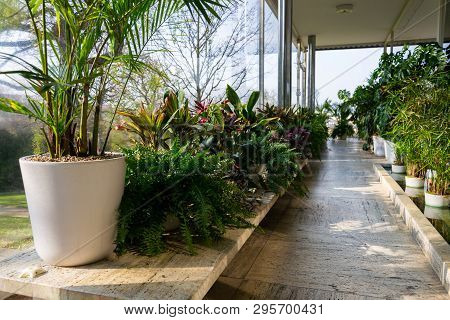 Various Green Plants In Winter Garden Modern Atrium, Sunny Spring Day, Clear Blue Sky Background