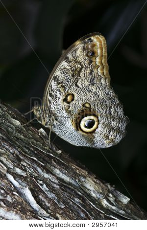 a brown and white camouflage butterfly on a log poster