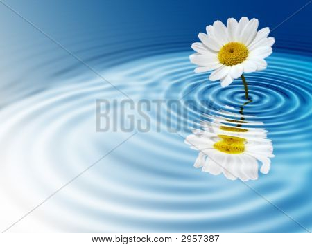 White daisy with reflection on blue rippled background poster