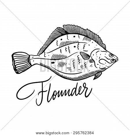 Fish Flounder. Hand Drawn Vector Illustration. Engraving Style. Isolated On White Background.