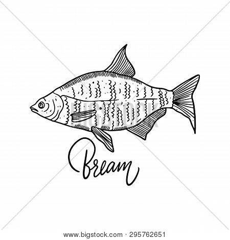 Fish Bream. Hand Drawn Vector Illustration. Engraving Style. Isolated On White Background.