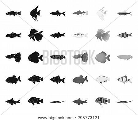 Different Types Of Fish Black.mono Icons In Set Collection For Design. Marine And Aquarium Fish Vect