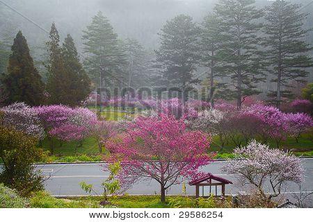 pink flowers blossoming tree branch deep bokeh