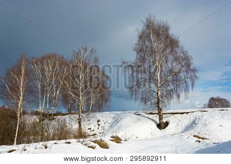 White-birch Birch On A Snowy Slope Against A Cloudy Sky.