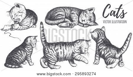Collection Of Cats Hand Drawing. The Cat Plays, Sleeps, Sits, Runs, Curiosity. Pose Kitten Vector Il
