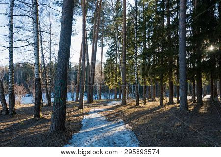 March Forest With A Snow Path In The Bright Rays Of The Evening Sun.