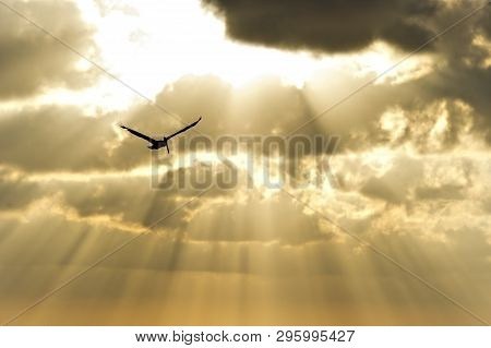 Sun Ray Heaven Bird Is A Single Soul Flying High Among Sun Beams And The Freedom And Light.