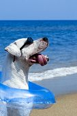 Dog wearing sunglasses and blue float sitting on a tropical beach. poster