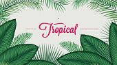 Summer tropical foliage calathea ornata leaves, vector background template for your design poster