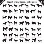 Big set of 49 different dogs, hounds, working, shepherd, terrier, companion, hunting. Vector set of different  dogs standing in profile. Isolated dogs breed silhouettes set in black color on white background. Part 2 poster