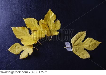Creative Multitask Background With Fallen Leaves And Duct Tape On Black Background. Leaves Lie Freel