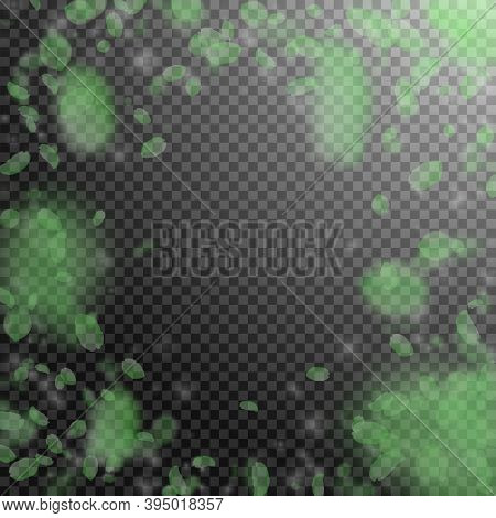 Green Flower Petals Falling Down. Comely Romantic Flowers Vignette. Flying Petal On Transparent Squa