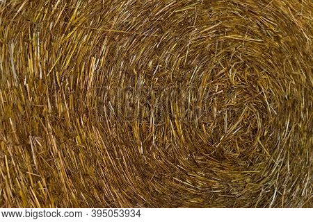 Close Up Of Hay Straws In The Autumn.
