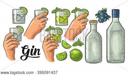 Glass, Bottle Gin And Branch Juniper. Vintage Vector Color Engraving