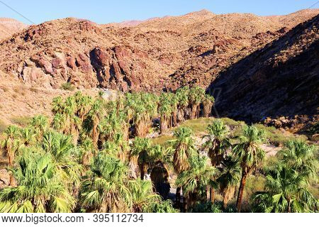 California Fan Palm Trees At A Natural Oasis Besides A Riparian Creek Surrounded By Barren Hills At