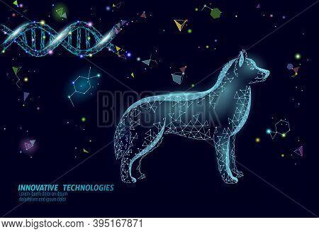Dog Silhouette Veterinary Pharmacy Banner Template. Theatment Drug Virus Infection. Vet Care Medical